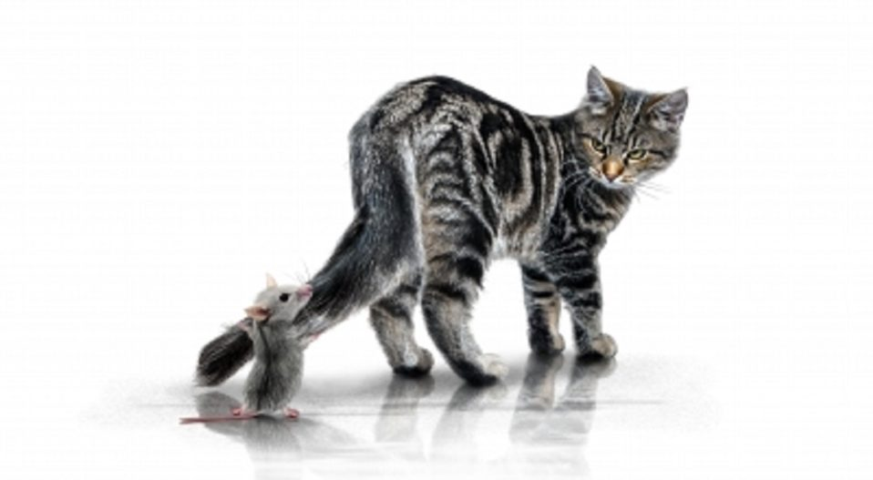 THREE MICE AND A KITTEN by Theophilus Femi Alawonde