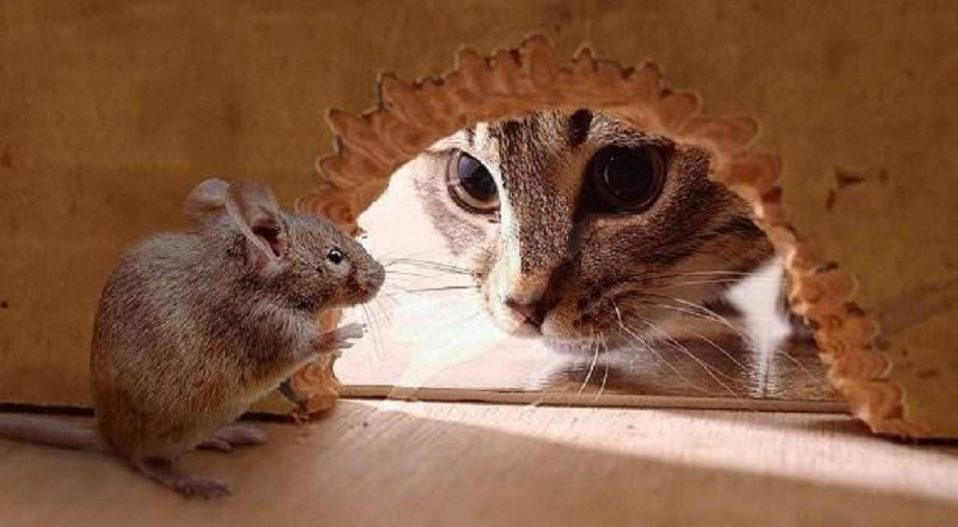 OF THE FEUD BETWEEN CATS AND MICE (a poem in two parts) by Theophilus Femi Alawonde